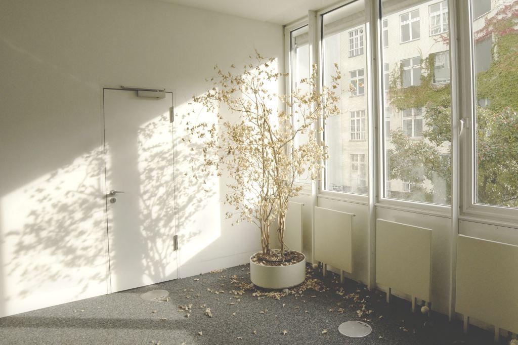 Dying tree near a window in an empty room.